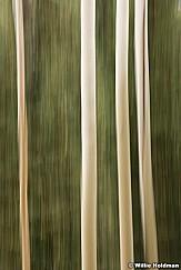 Aspen Abstract Impressionism 100315 2