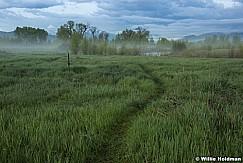 Provo River Mist 050916 2975