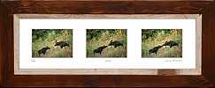 series moose