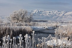 Heber Frost 012316 0792