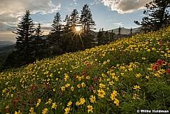 Lone Peak Wildflowers 081217 8477