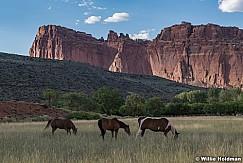 Capitol Reef Horses 081120 4957 2