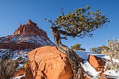 Pinion Pine Red Rock 012620 9603 4