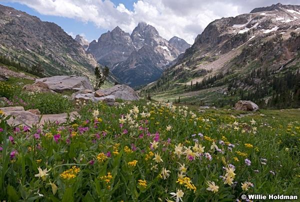 Cascade Mountain Wildfowers 082019 2157 2