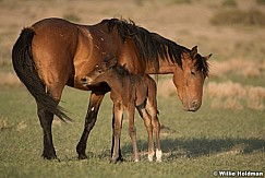 Wild Horse with Foal 051621 8555