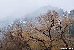 Moody Cascade Willows