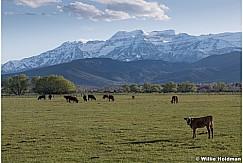 Spring Green Pasture Heber 050219 7596 2