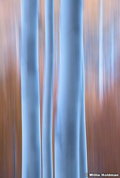 Aspen Abstract 101219 8590 6small