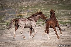 Horse bitting butt 051521 7762