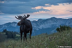 Moose Ridge Line 080516 9614 2