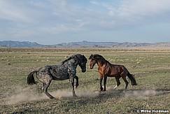 Mustang Gesture 051621 9386