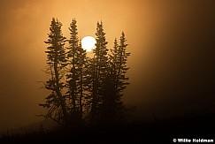 Lone Pines Mist 082615 7081