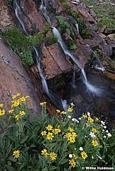 Tripple Waterfall Wildflowers 082419 44158 2