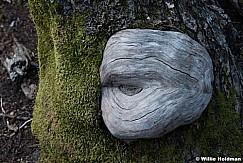 Knott of Tree 031516 6880