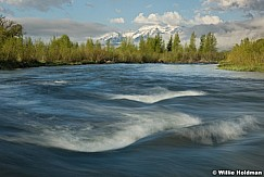 Timnpanogos Provo River 050916 3361