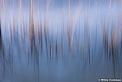 Abstract Grasses 111718 8339 3