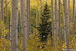 Lone Pine Aspens 092920 1597 5