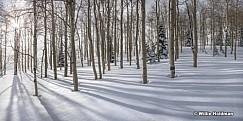 Aspen winter forest 01017 7708