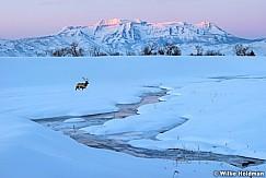 Timpanogos Sunrise Winter Elk