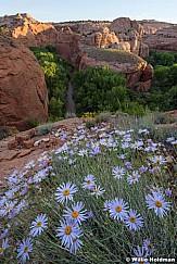 Escalante River Flowers 060316 9766
