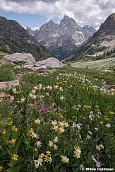 Cascade Canyon Wildflowers 081119 2129