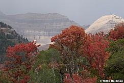 Red Orange Maples Timp 092220 0301 2