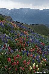 Timpanogos Wildflowers Storm 072720 2F