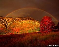 Cascade Rainbow Maple