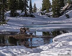 Moose Silver Glance 062919 6945 21