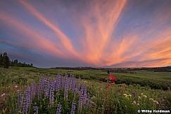 Mountain Wildflowers Sunset 071017 1315 2 21