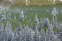 Spring Aspens Snow 011317 4989