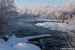 Frosty Trees Provo River 011316 9571
