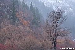 Provo Canyon Colors 032621 7201 3