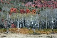 Autumn Palette 092016 3