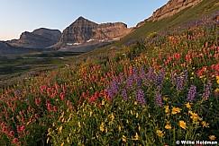 Timpanogos Sunrise Wildflowers 080216 7321 2