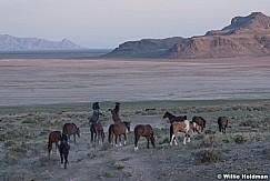 Wild Horses 051621 8845