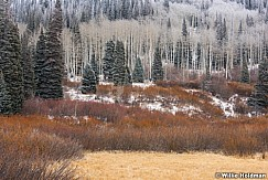 Rust Frost Trees 111716 2834 3 1