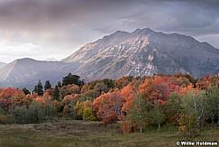 Timpanogos Cascade Meadow 092819 3556