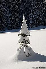 Lone Pine Winter Snow 011417 1199