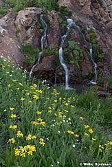 Flowing Waterfall Wildflowers 082419 4323 3 2