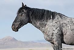 Mustang Resting 051621 9724