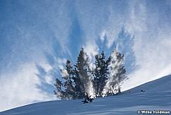 Trees Backlit 3