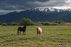 Heber North Fields Horse 051716 4798