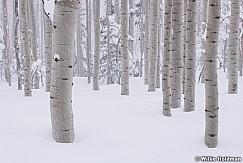 Aspen Grove Snow Storm031319 0050