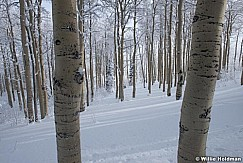 Snowy Aspens 123014 1693 2
