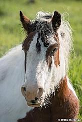Horse Eye Portrait 050916 3443