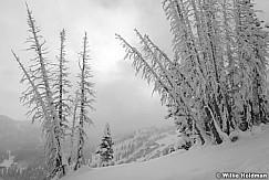 Powder Frosty Trees 111020 1290 4