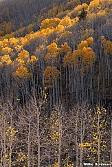 Layers Of Aspens 100919 7278 5