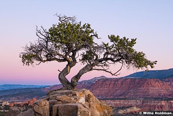Lone Tree Teasdale 111720 2451 2