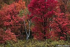 Richest Maple Autumn 092317 3212